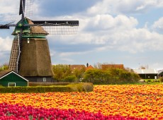 Netherlands Holland high school study abroad Aspect Foundation affordable Dutch